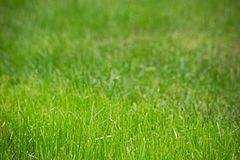 Trimmed green grass. Soft focus royalty free stock photos