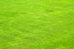 Trimmed green lawn Stock Photos