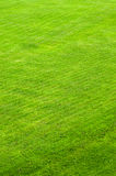 Trimmed green lawn Royalty Free Stock Image