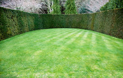 Trimmed hedge around oval lawn. In a formal garden Stock Image