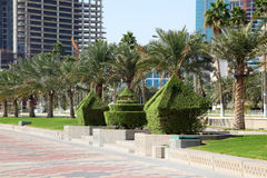 Trimmed hedge in Doha, Qatar Stock Photography