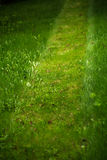 Trimmed lawn path Royalty Free Stock Images
