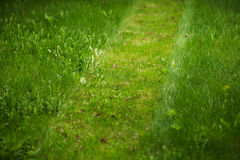 Trimmed lawn path Stock Image
