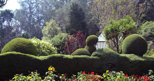 Trimmed ornamental plants. Flowers and trimmed plants in ooty botanical garden, tamilnadu, india Royalty Free Stock Photos