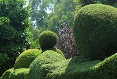 Trimmed ornamental plants. Flowers and trimmed plants in ooty botanical garden, tamilnadu, india Royalty Free Stock Photo