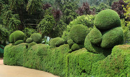 Trimmed plant bear. Bear shaped trimmed plant in ooty botanical garden, tamilnadu, india Stock Photo
