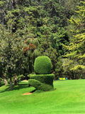 Trimmed plant. In the botanical garden, ooty, tamilnadu, india Royalty Free Stock Photos