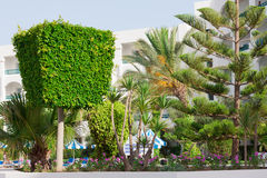 Trimmed plants Royalty Free Stock Image