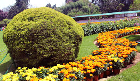 Trimmed  plants with flower bed. Flowers and trimmed plants in ooty botanical garden, tamilnadu, india Stock Photo