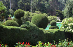 Trimmed  plants. Flowers and trimmed plants in ooty botanical garden, tamilnadu, india Stock Image