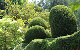 Trimmed  plants. Flowers and trimmed plants in ooty botanical garden, tamilnadu, india Royalty Free Stock Image