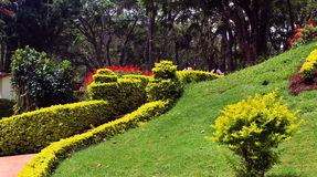 Trimmed plants in garden. Flowers with trees and trimmed plants kateri park near ooty, tamilnadu, india Royalty Free Stock Photos