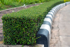 Trimmed Plants Hedge. Royalty Free Stock Photos