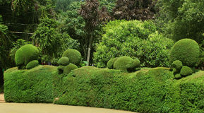 Trimmed plants. In ooty botanical garden, tamilnadu, india Royalty Free Stock Photos