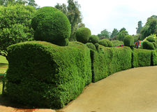 Trimmed plants. In ooty botanical garden, tamilnadu, india Stock Photography