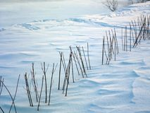 Trimmed Plants In Winter. Trimmed plants half covered with snow, sunny day outdoor shot Stock Photography