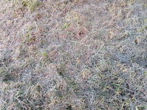 Trimmed spring grass dried in the sun Royalty Free Stock Photo