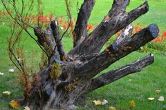 trimmed-tree-branches Royalty Free Stock Images