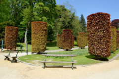 Trimmed trees іn the park Royalty Free Stock Photos