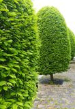 Trimmed trees Stock Image