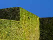 Stately Home Garden Hedge. A neatly trimmed and manicured hedge in a stately home garden. Powis Castle, Wales, UK stock photo