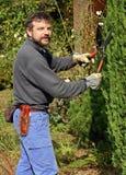 Trimmen eines Baums Stockbild