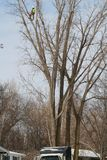 Trimmer d'arbre image libre de droits