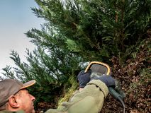 Trimmer de haie dans l'action Bush équilibrant le travail Faisant du jardinage et coupant des activités photo libre de droits