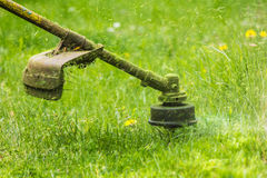 Trimmer head cutting grass to small pieces Stock Photo
