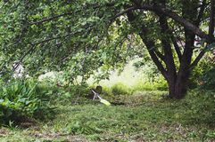 Trimmer lawn mower lies in the grass under the tree. stock images