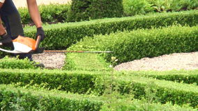 Trimming Boxwood. In the gardens of Frederiksborg Palace, Denmark stock footage