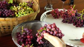 Trimming a bunch of ripe seedless grapes