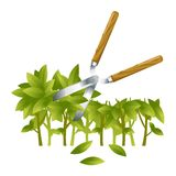 Trimming Bushes Stock Images