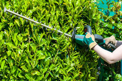 Trimming the Bushes Royalty Free Stock Photography