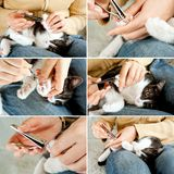 Trimming cat nails. Cutting off domestic cat's claws. Set of photos. Hand holding clippers Stock Photography