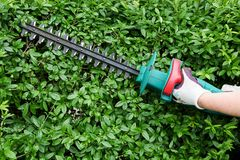 Trimming garden hedge Stock Photography