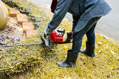 Trimming hedge with trimmer machine Stock Image