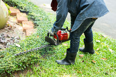 trimming hedge with trimmer machine Stock Photos