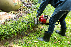 trimming hedge with trimmer machine Royalty Free Stock Photos
