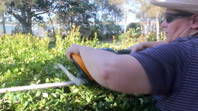 Trimming Hedges. Mature plus size woman operating a hedge trimmer cutting a hedge stock video