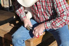 Trimming the Hoof 3. Large animal vet trimming the hoof of a goat royalty free stock images