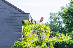 Trimming an ivy with hedge trimmer. Stock Photography