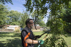 Trimming A Low Lying Tree Limb Stock Image