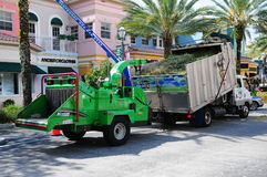 Trimming palm trees in front of retail stores, FL Stock Photography
