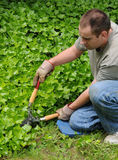 Trimming Plants Outside Stock Photography