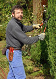 Trimming a tree Stock Image