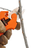 Trimming a Tree Branch with Pruning Shears Stock Image