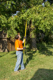 Trimming Tree Branches Around A Telephone Line Stock Photography