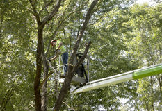 Trimming a tree Royalty Free Stock Photography