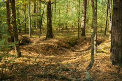 Trincheiras da guerra de Velho Mundo em Forest Since Second World War, Bielorrússia foto de stock royalty free
